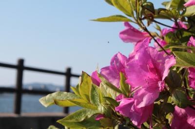 季節の花がお出迎え