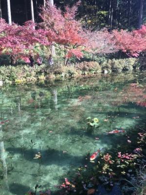 モネの池5.JPG