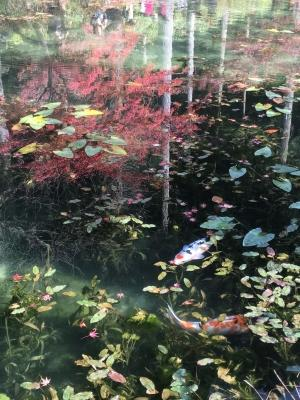 モネの池1.JPG