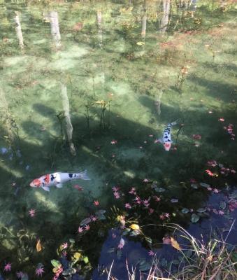 モネの池4.JPG
