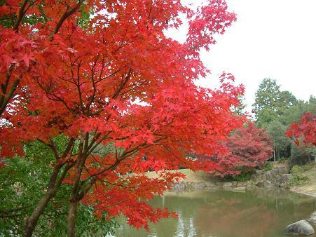 奈良公園の紅葉2