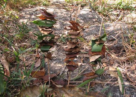 落ち葉で焼き鳥