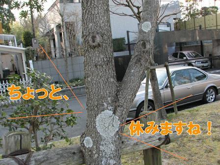 変な顔の木