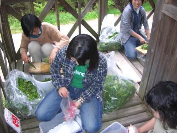 京都野草酵素
