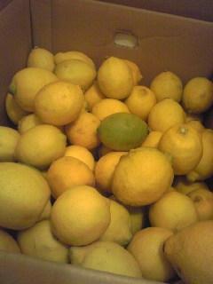 おおみしまレモン