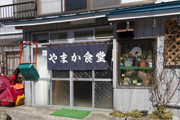 昭和村で福寿草が咲いています