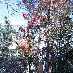 庭のお花.jpg