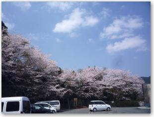 日向峠の桜1