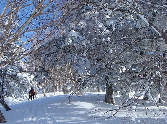 yamaboku wild snow park