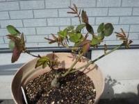 leaf15