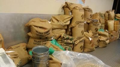 焙煎前の生豆たち、これから選別されていきます。