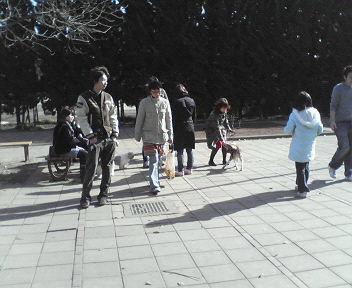 駒沢公園ドッグランのようす