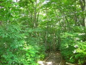 ブナ林の緑がすがすがしい登山道