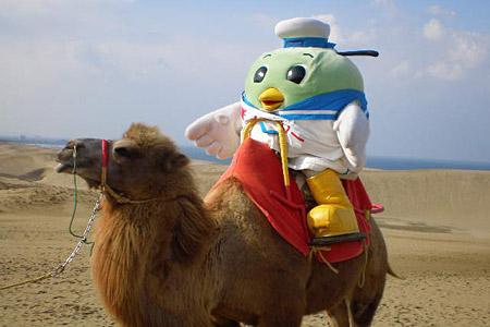すべての講義 数数え : 鳥取砂丘でラクダに乗ってる ...