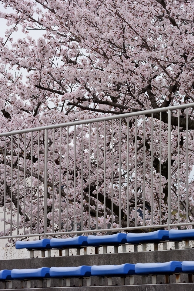 sakura-miyoshi_78.jpg