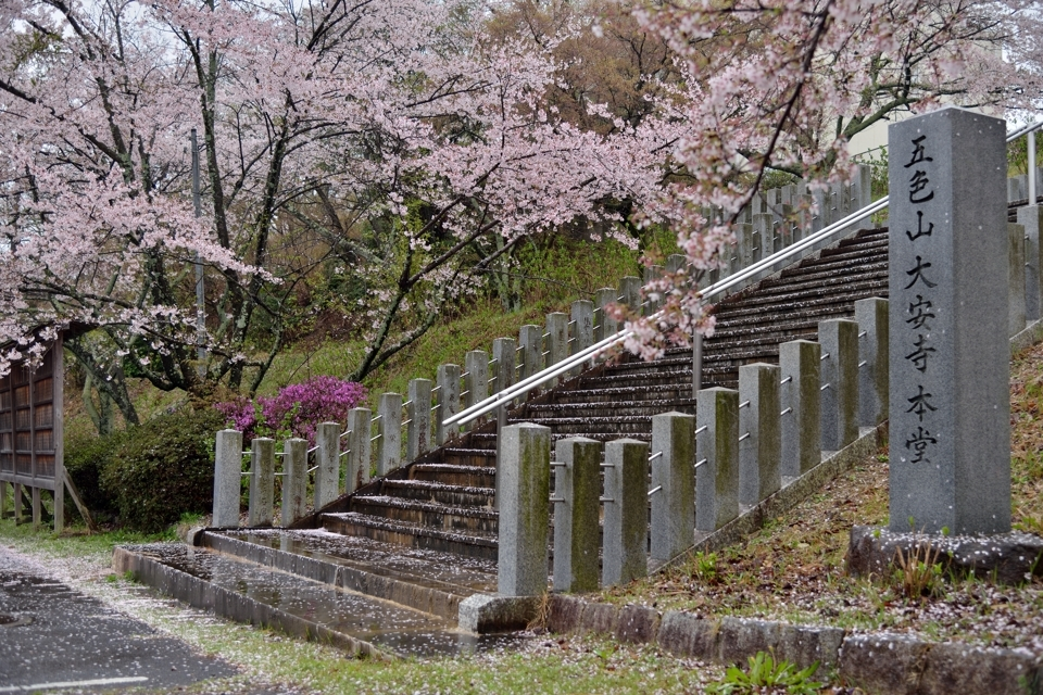goshikien-sakura_1.jpg