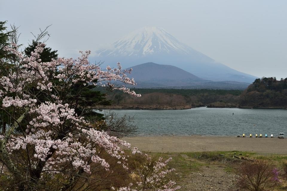 富士五湖_桜名所_写真5.jpg