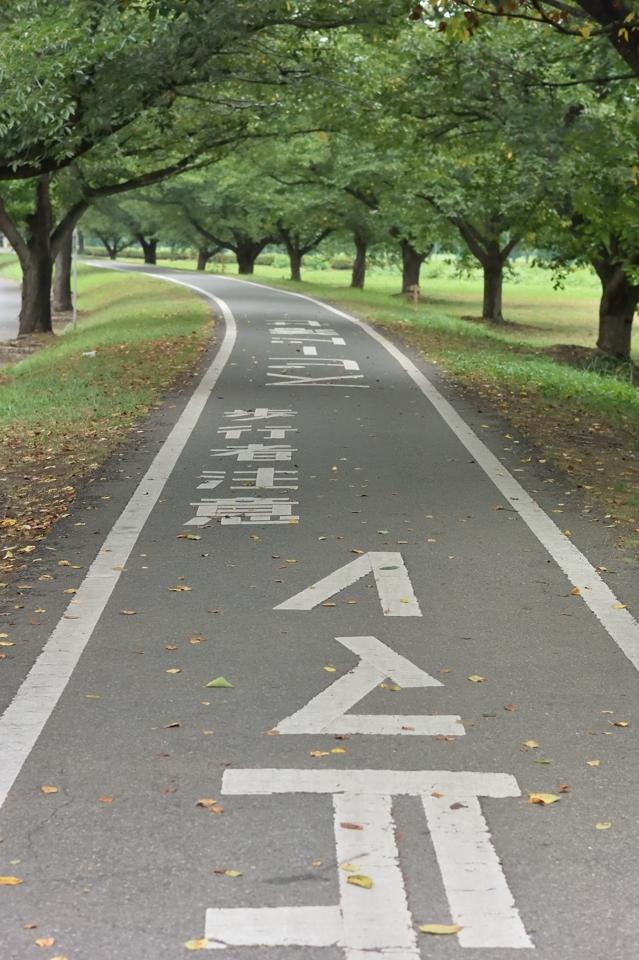 入間川サイクリングロード ランニング2.jpg