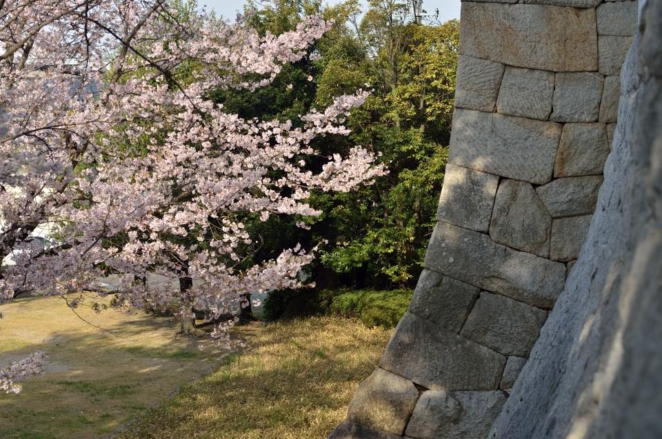 豊田市美術館_桜4.jpg
