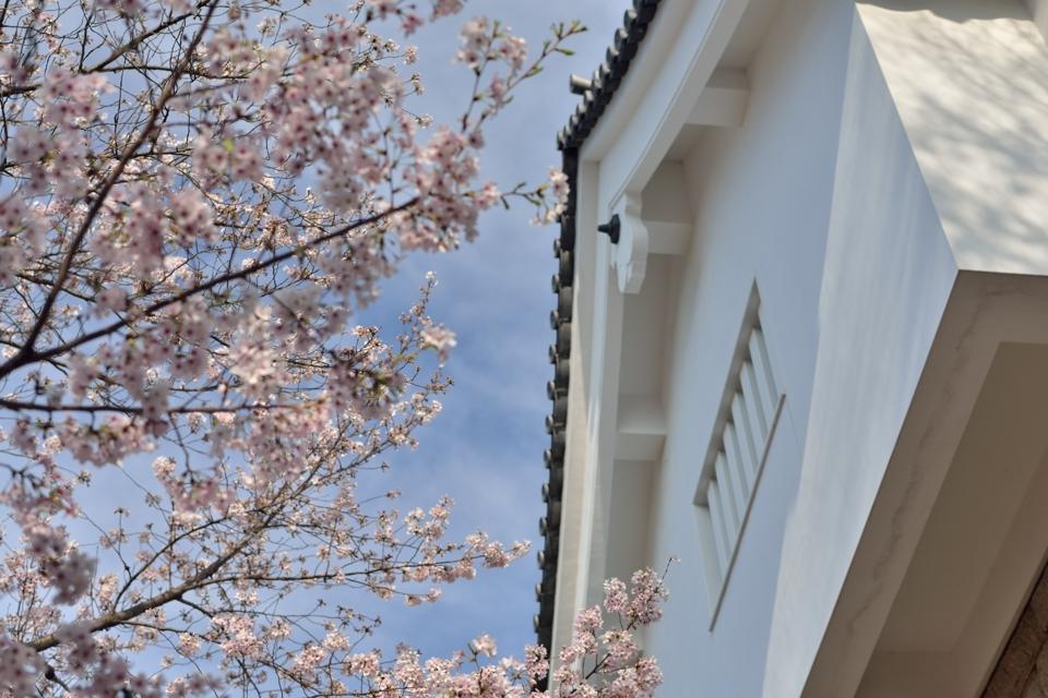 豊田市美術館_桜5.jpg