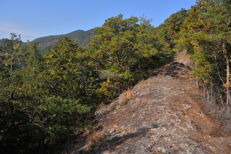 愛知県民の森トレイルランコース1.jpg