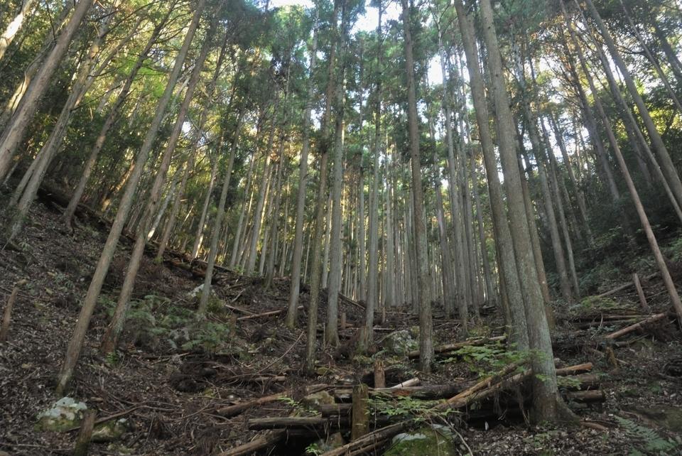 愛知県民の森トレイルランコース2.jpg