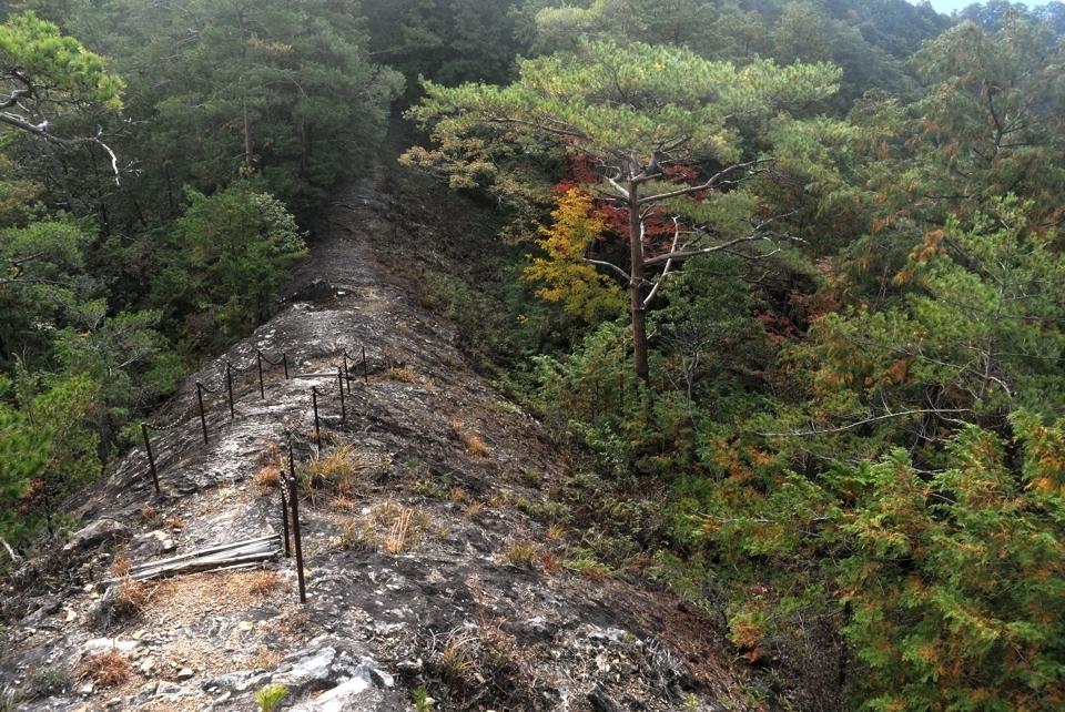 愛知県民の森トレイルランコース6.jpg