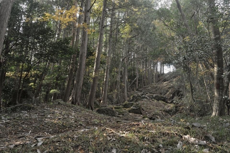 愛知県民の森トレイルランコース8.jpg