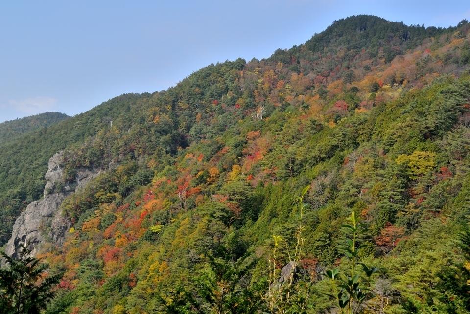 愛知県民の森トレイルランコース10.jpg