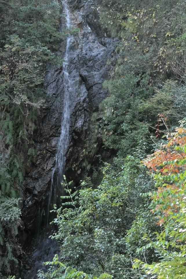 愛知県民の森トレイルランコース12.jpg