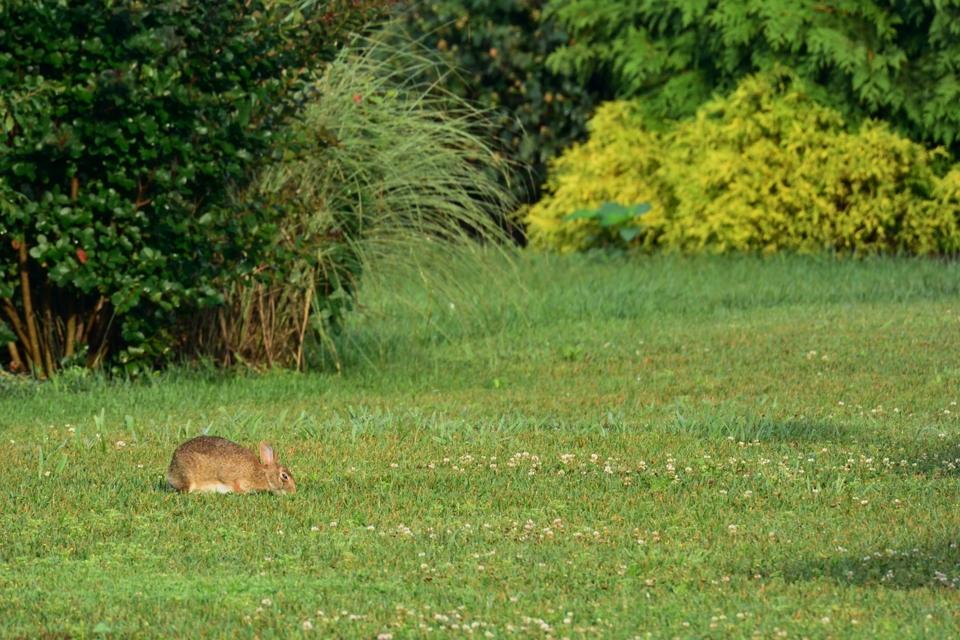庭には二羽、兎が。1.jpg