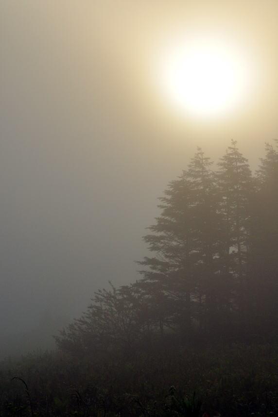 霧ヶ峰写真4.jpg