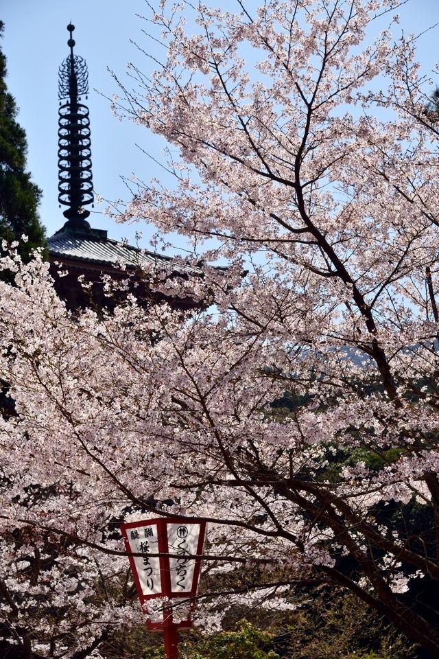 醍醐寺_桜写真3.jpg