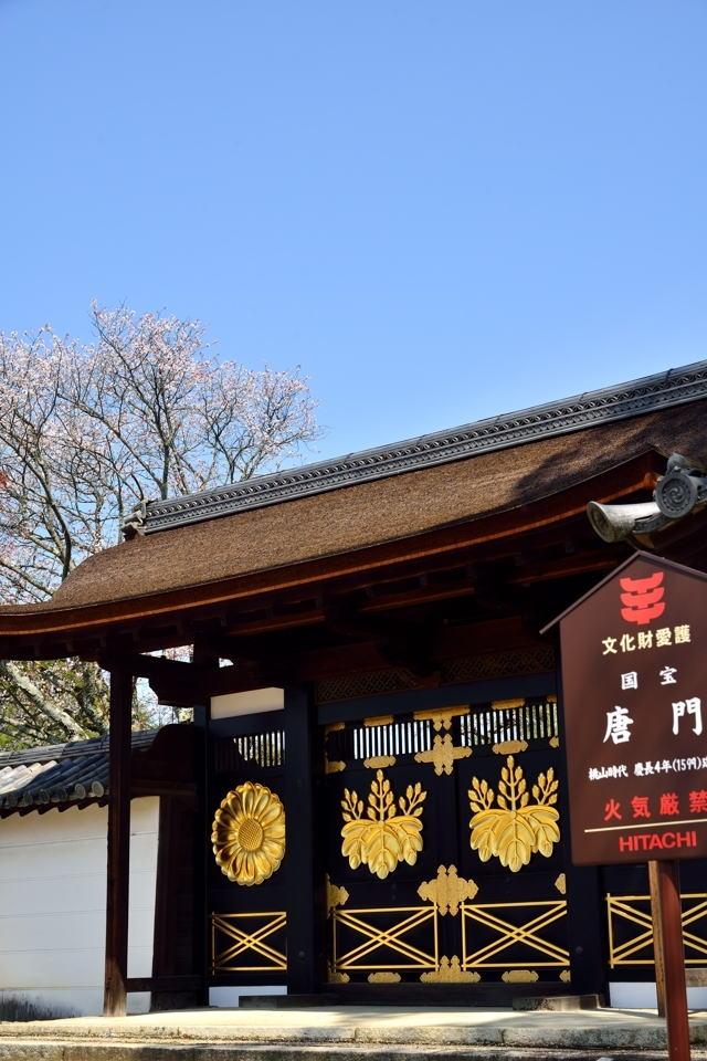 醍醐寺_桜写真5.jpg