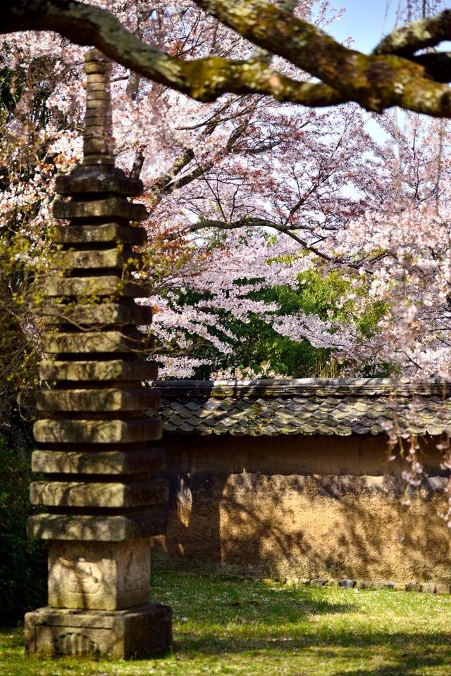 醍醐寺_桜写真11.jpg