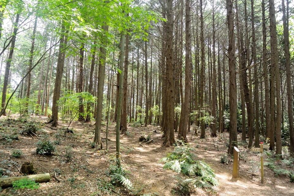 京都一周トレイルランニング東山コース7.jpg