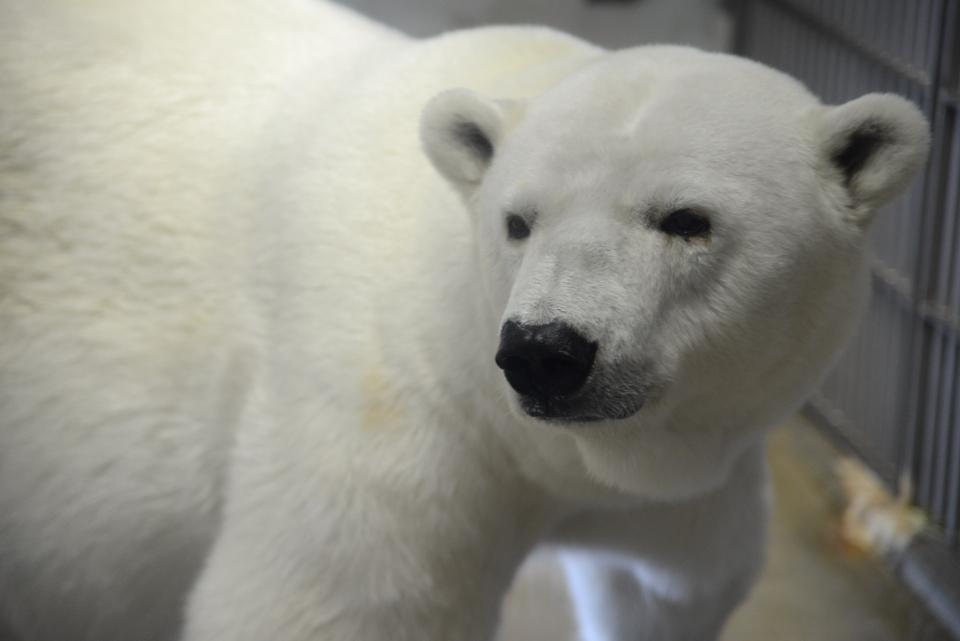 東山動物園画像1.jpg