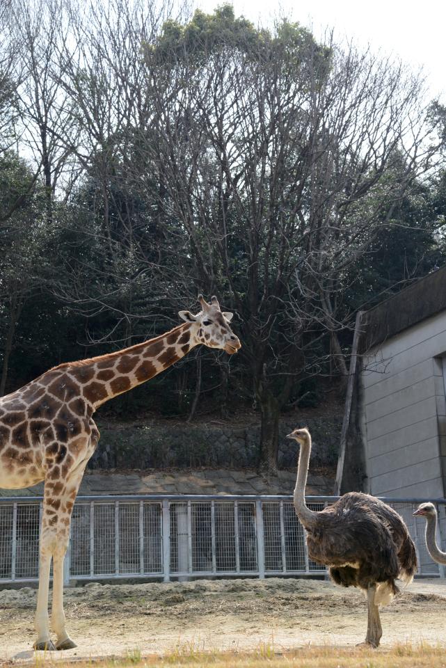 東山動物園画像2.jpg