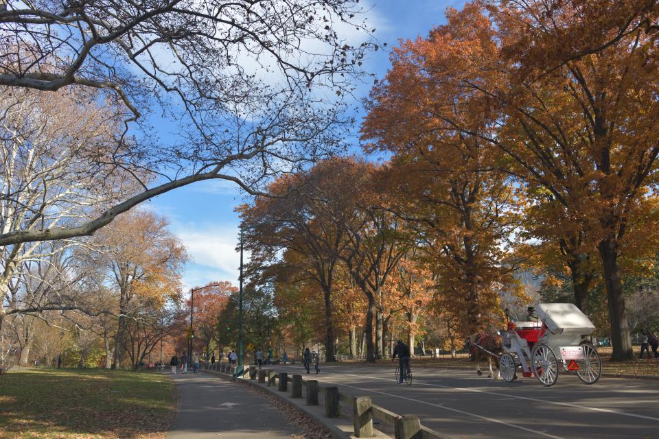 セントラルパーク写真ニューヨーク3.jpg