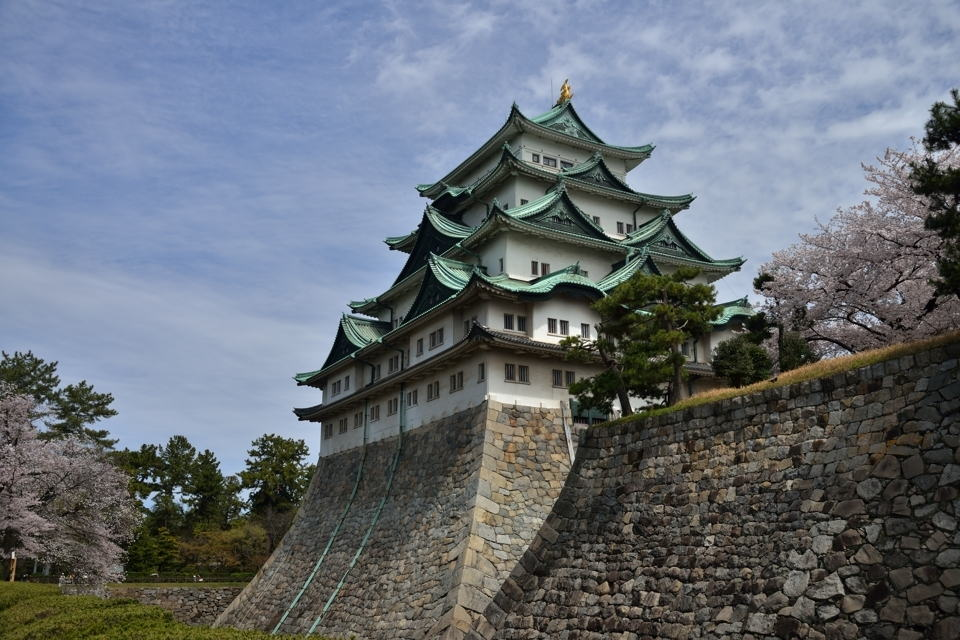 名古屋城_桜画像2.jpg