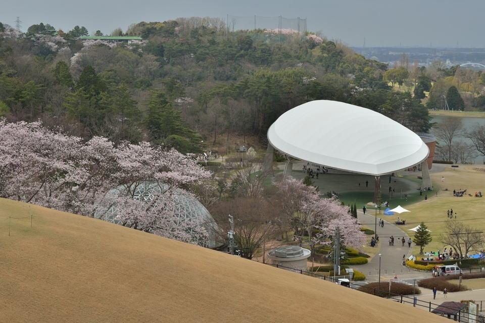 鞍ヶ池公園_桜画像5.jpg