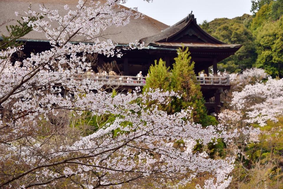 清水寺画像10.jpg