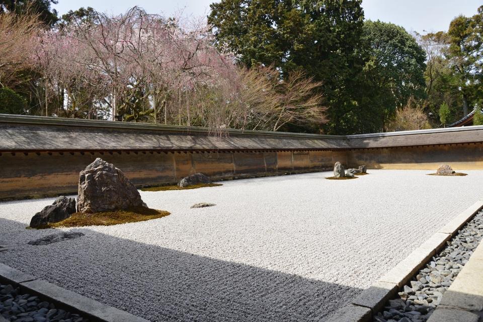 竜安寺_方丈庭園_桜写真7.jpg
