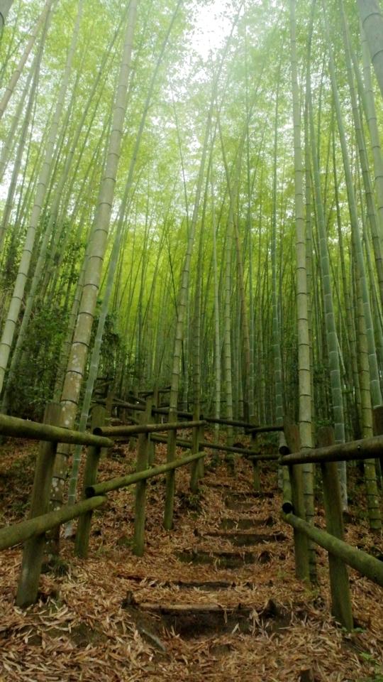 京都一周トレイル_西山コース3.jpg