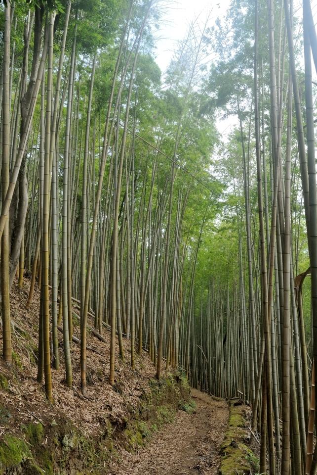京都一周トレイル_西山コース5.jpg