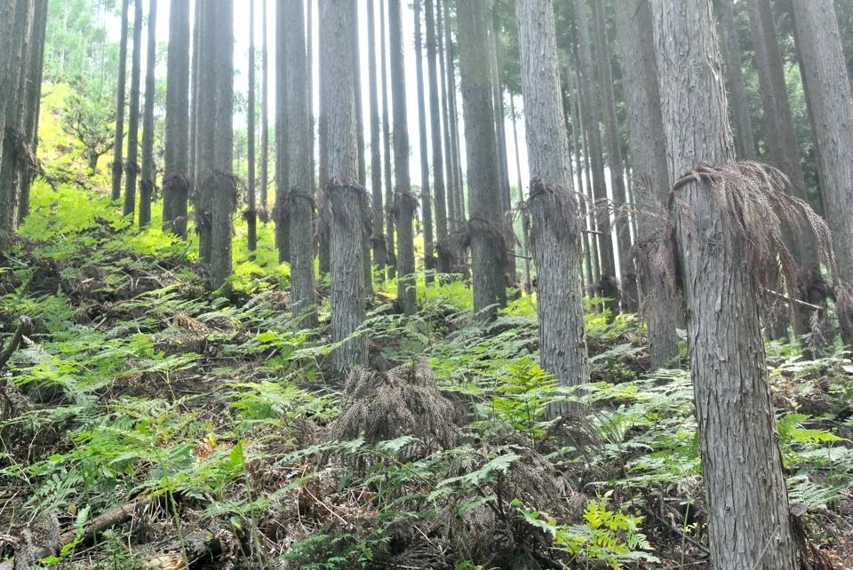 京都一周トレイル_西山コース22.jpg