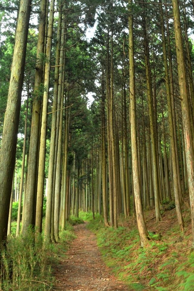 京都一周トレイル_西山コース40.jpg