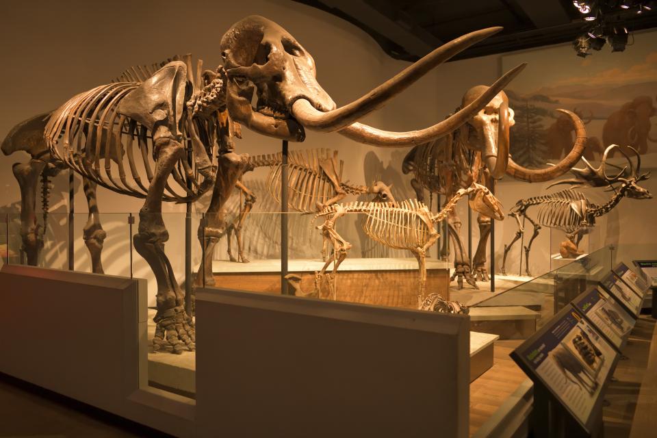 フィールド自然史博物館シカゴ4.jpg