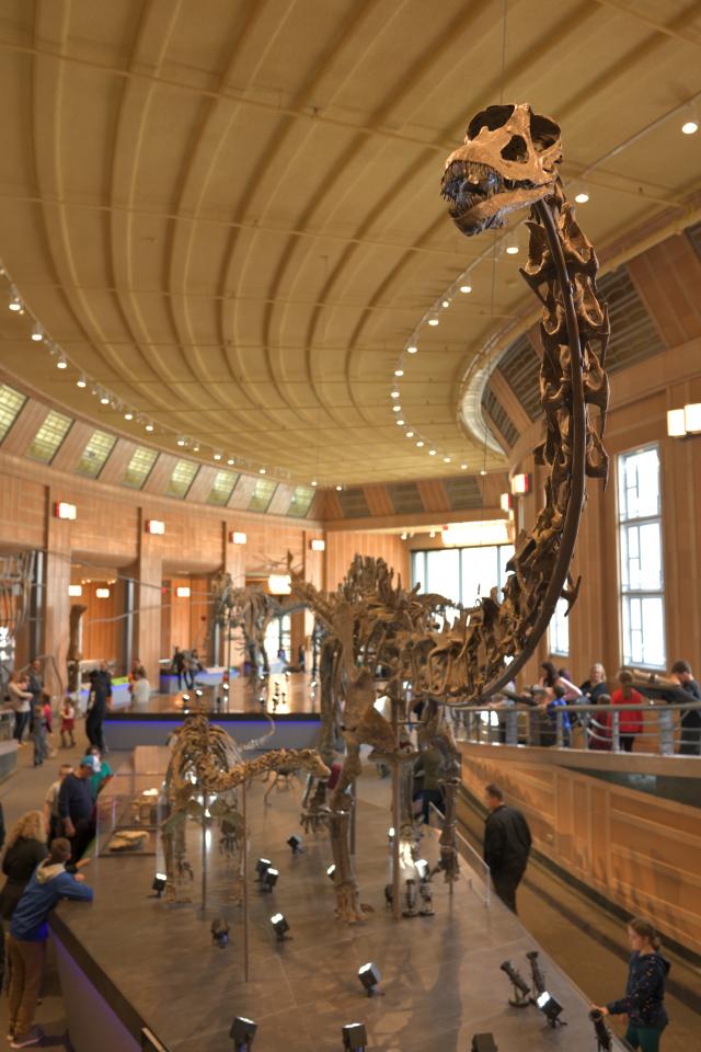 シンシナティ自然科学博物館1.jpg