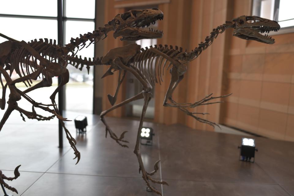 シンシナティ自然科学博物館3.jpg